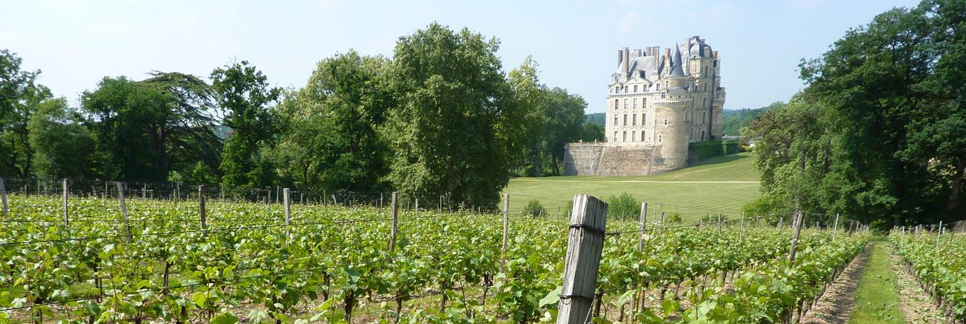 Château de Brissac Parcelle